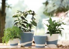 Burlington Pots Pale Blue on White Pot 6inch